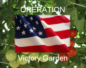 Operation Victory Garden – Victorious Provision of Fresh Produce for Our Veterans